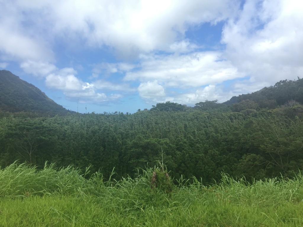 Lulumahu Falls Trail 1