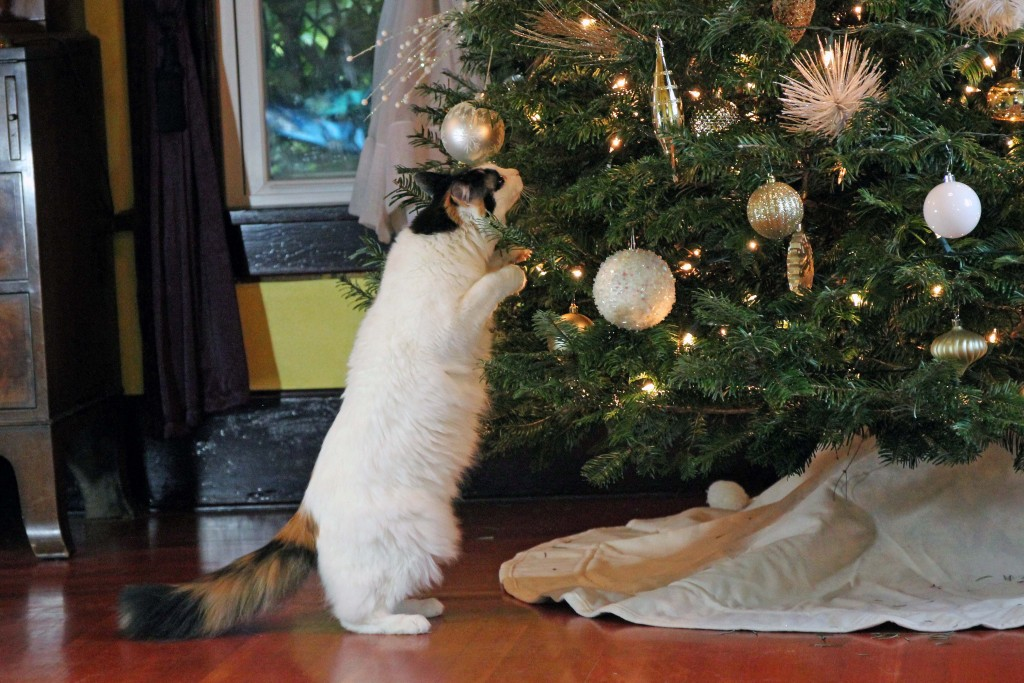 7-cats-and-christmas-trees