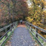Fall in the United Kingdom