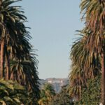How to Find the Palm Tree Lined Street with a View of the Hollywood Sign
